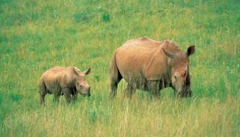 Run 4 Rhinos details fun run 28 July