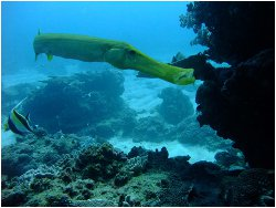 The value of a Guided Snorkelling Safari 2 SA Study University, FET and Bursary Information South Africa
